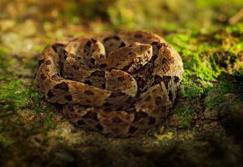 Serpientes peligrosas en América
