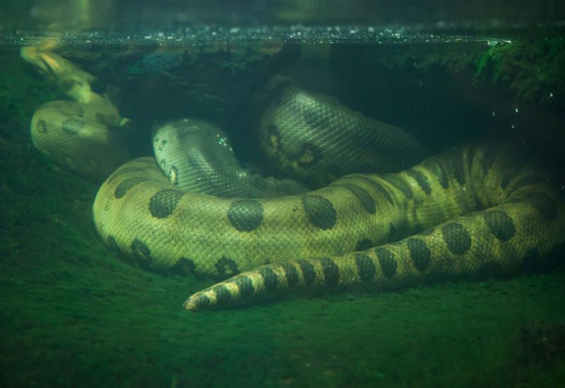 Las serpientes más grandes del mundo