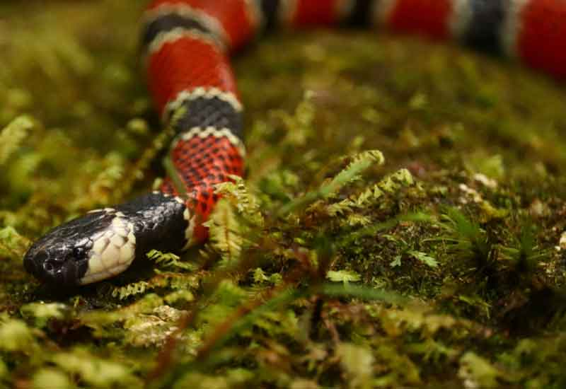 serpientes argentinas