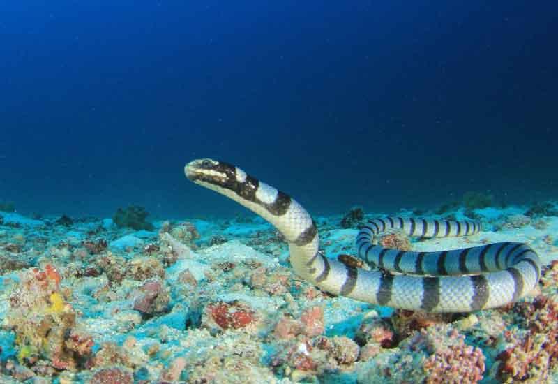 serpientes acuáticas