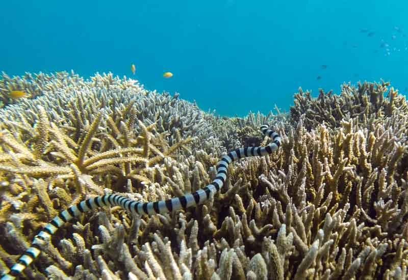 Serpiente marina de pico